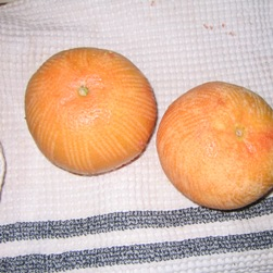 Zested Grapefruit